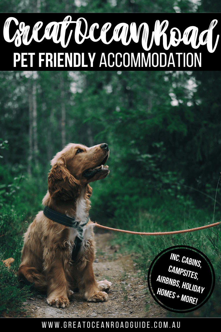 Pin image for Pet Friendly Accommodation Great Ocean Road of a cocker spaniel sat down wearing a harness on a lead on a path in the forrest