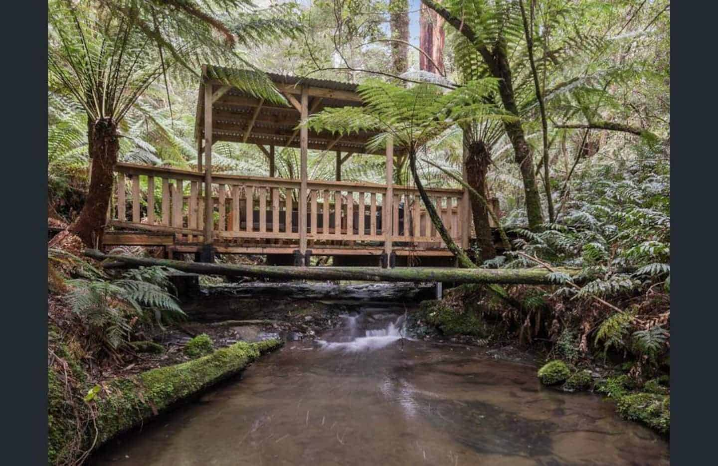 Rainforest with a wooden bridge crossing a stream