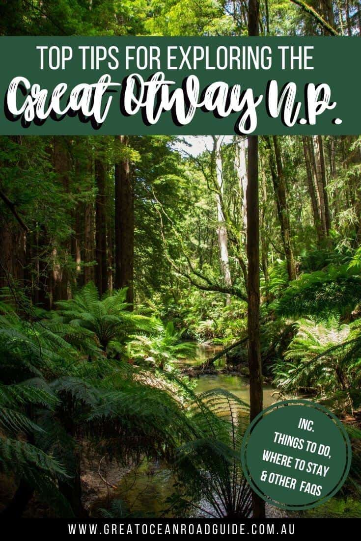 How to Explore the Great Otway National Park