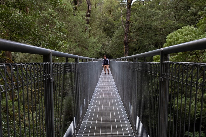 Metal walkway raised high into the tree canopy, man standing on the platform