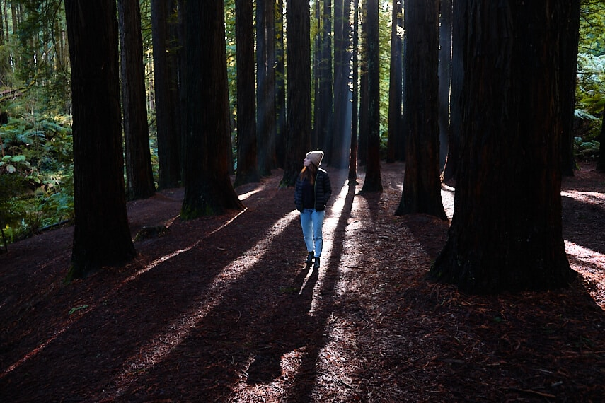 Woman stading under the tree canopy of the surrounding redwood trees